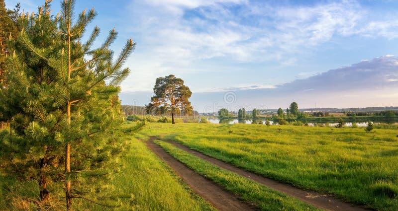 在乌拉尔河的夏天风景有在银行,俄罗斯的树的 免版税库存照片