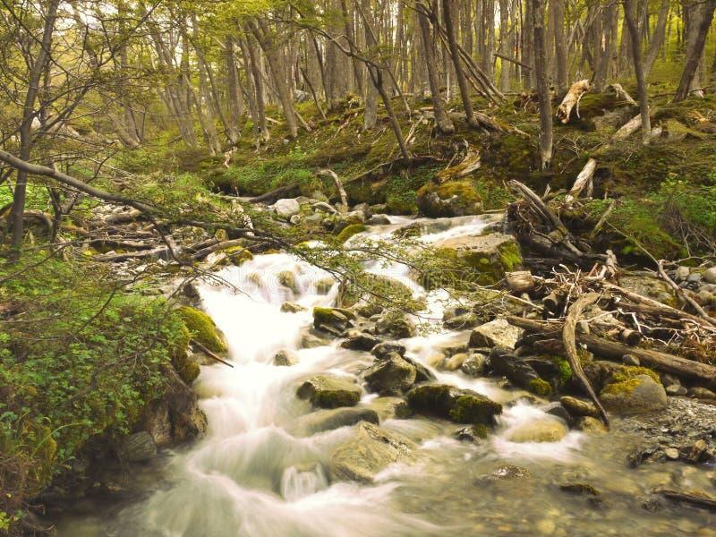 在乌斯怀亚巴塔哥尼亚阿根廷的一条森林小河 库存照片