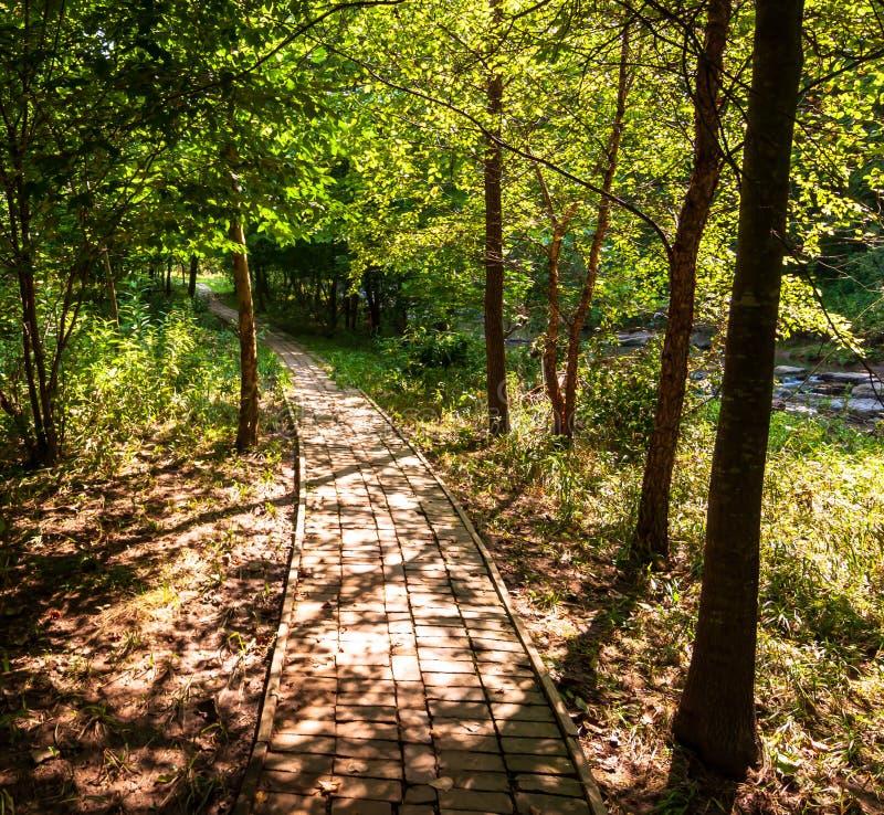 在九英里奔跑旁边的一条自然人行道在弗利克公园,匹兹堡,宾夕法尼亚,美国 免版税库存照片