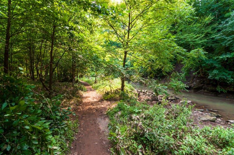 在九英里奔跑旁边的一条自然人行道在弗利克公园,匹兹堡,宾夕法尼亚,美国 免版税库存图片