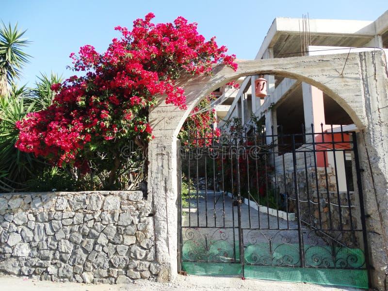 Download 在九重葛中的传统街道在希腊 库存照片. 图片 包括有 平衡, 灌木, 房子, 任何地方, 克利特, 草坪 - 72358494