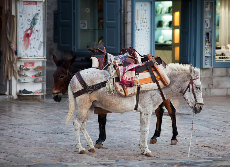 在九头蛇的驴在希腊 库存图片