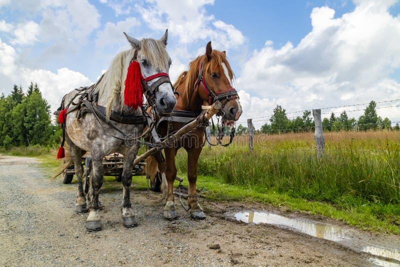 在乡下公路的两匹马 免版税库存照片