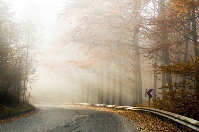 在乡下公路的雾 库存照片
