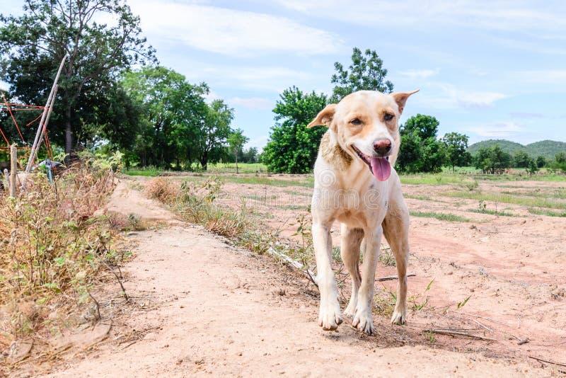 Download 在乡下的愉快的白色狗 库存图片. 图片 包括有 逗人喜爱, 外面, 运行, 空白, 公园, 敌意, 休眠 - 59109361