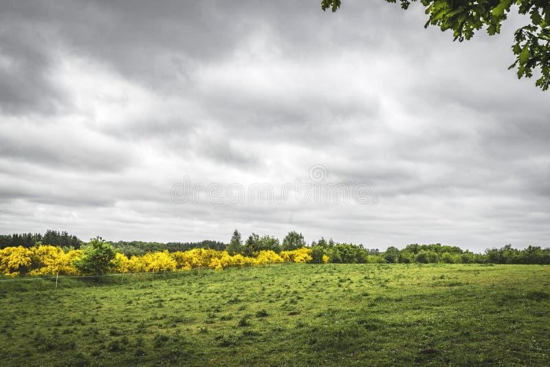 在乡下的风景有一个绿色领域的 库存图片
