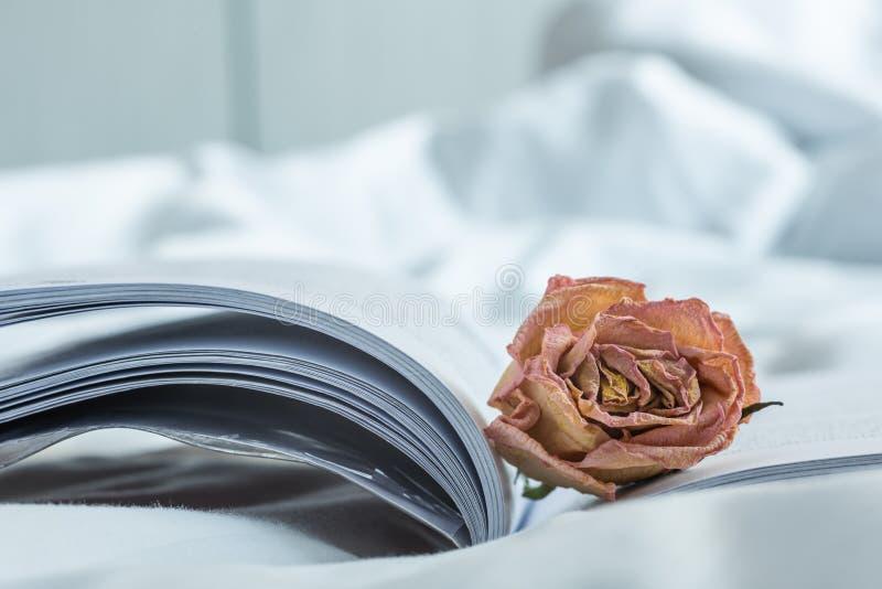 在书的凋枯的桃红色玫瑰 库存照片