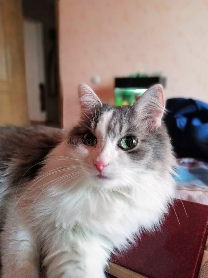 在书的猫 免版税图库摄影