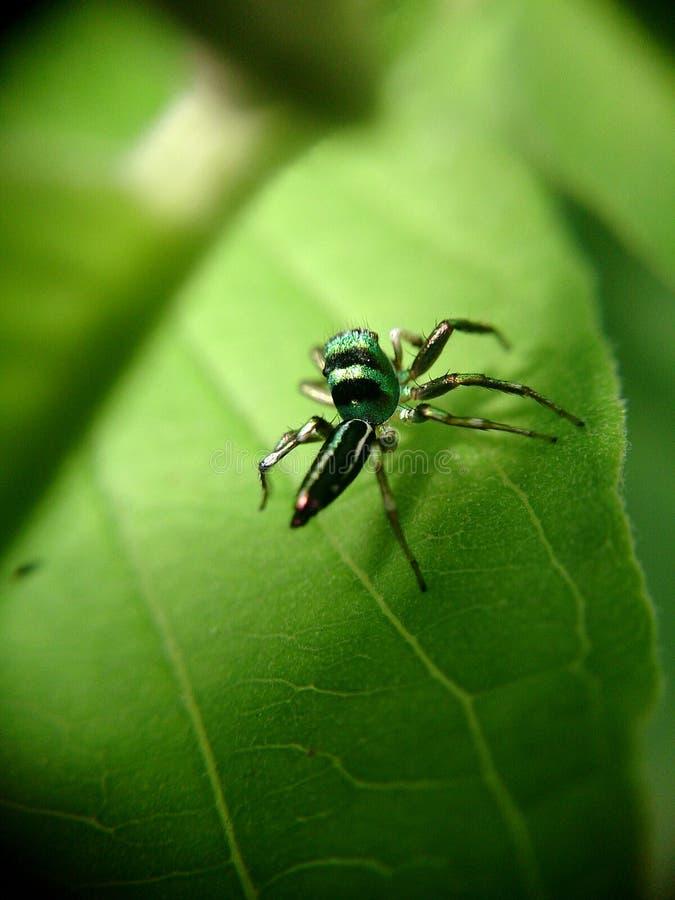 在事假的一只小的蜘蛛 免版税库存图片