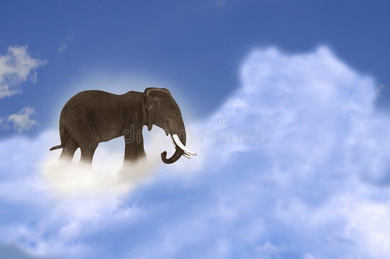 在云彩的大象 库存图片