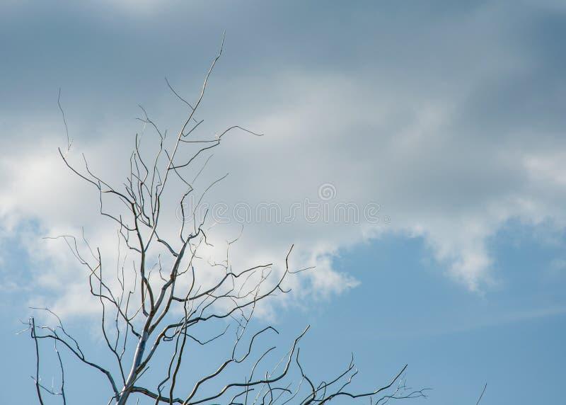 在云彩的天空 没有叶子的结构树 库存照片