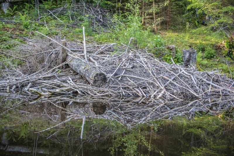 在五海的一条河,慢慢移动小屋 免版税图库摄影