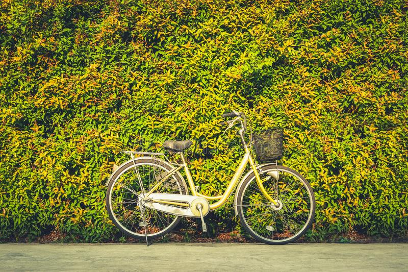 在五颜六色的叶子墙壁背景的葡萄酒自行车 经典自行车是友好的环境 库存图片