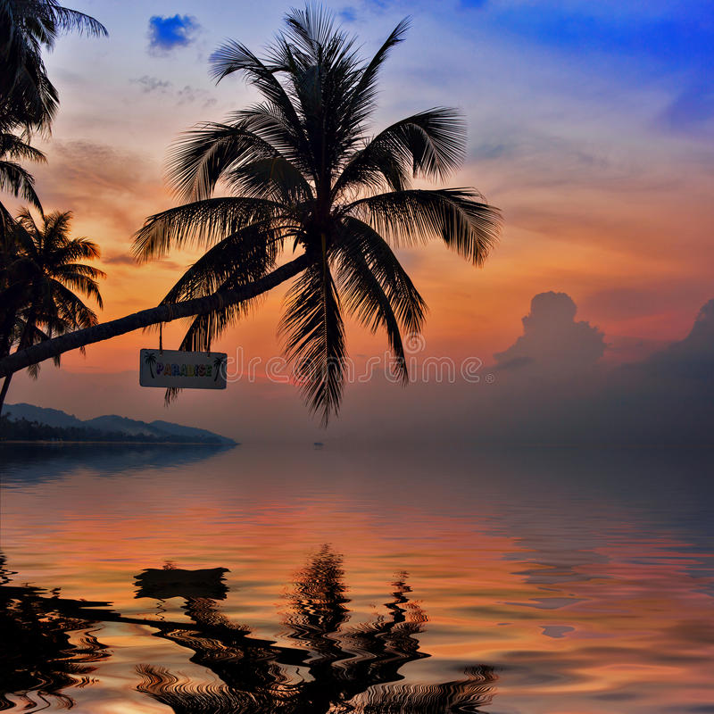 在五颜六色的天空背景的棕榈树剪影 库存照片