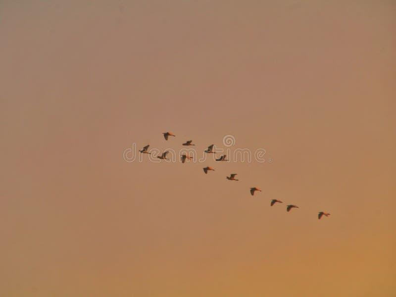 在五颜六色的天空背景隔绝的鸟剪影群  库存图片
