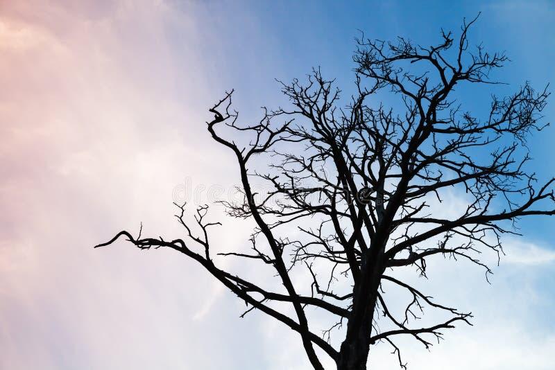 在五颜六色的晚上天空的黑不生叶的树照片 库存图片