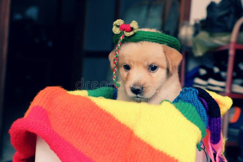 在五颜六色的毯子的逗人喜爱的小狗 库存图片
