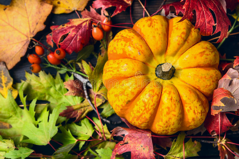 在五颜六色的秋叶的南瓜用野玫瑰果,顶视图 免版税库存照片