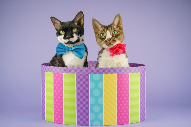 在五颜六色的箱子的2只猫 库存图片