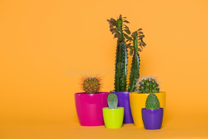 在五颜六色的罐的美丽的各种各样的绿色仙人掌 免版税库存图片