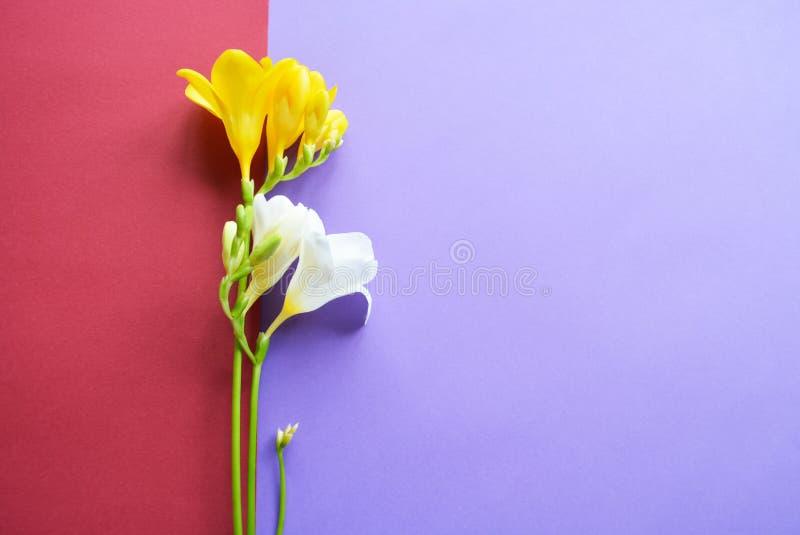 在五颜六色的背景的白色和黄色花 免版税库存照片