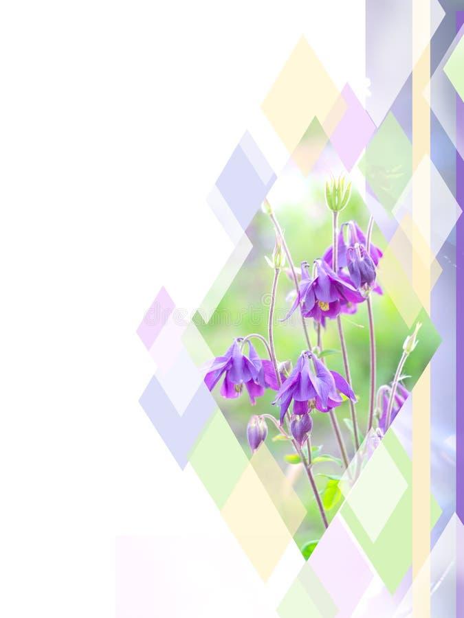 在五颜六色的菱形背景的美丽的紫罗兰色花 能为小册子,飞行物,名片使用 向量例证