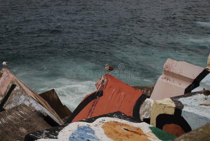 在五颜六色的防堤栖息的海鸥 库存图片
