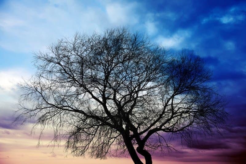 在五颜六色的风雨如磐的云彩上的黑暗的树剪影 图库摄影