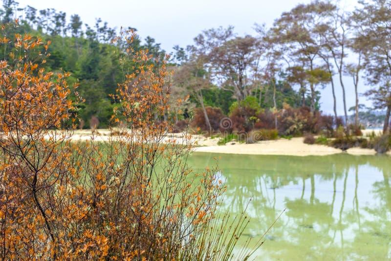 在亚伯塔斯曼国家公园的洪流海湾 免版税库存图片