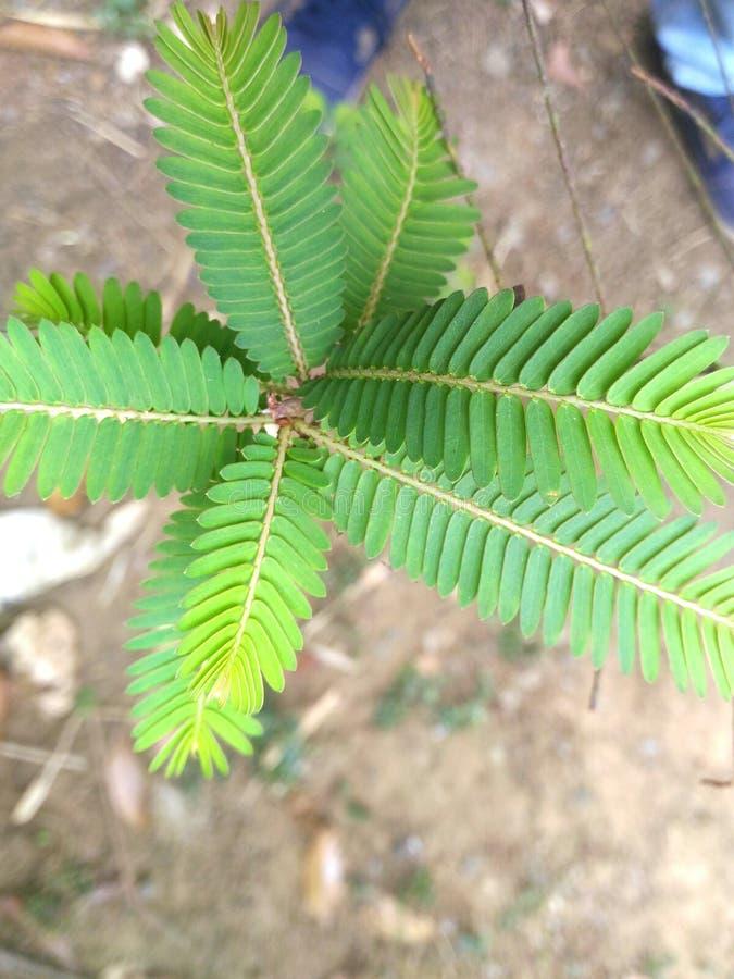 在亚洲和印度环境的自然 库存照片