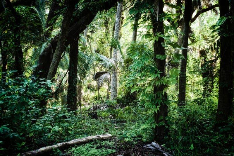 在亚热带密林背景里面的清早 免版税库存照片