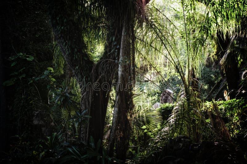 在亚热带森林背景里面的清早 图库摄影