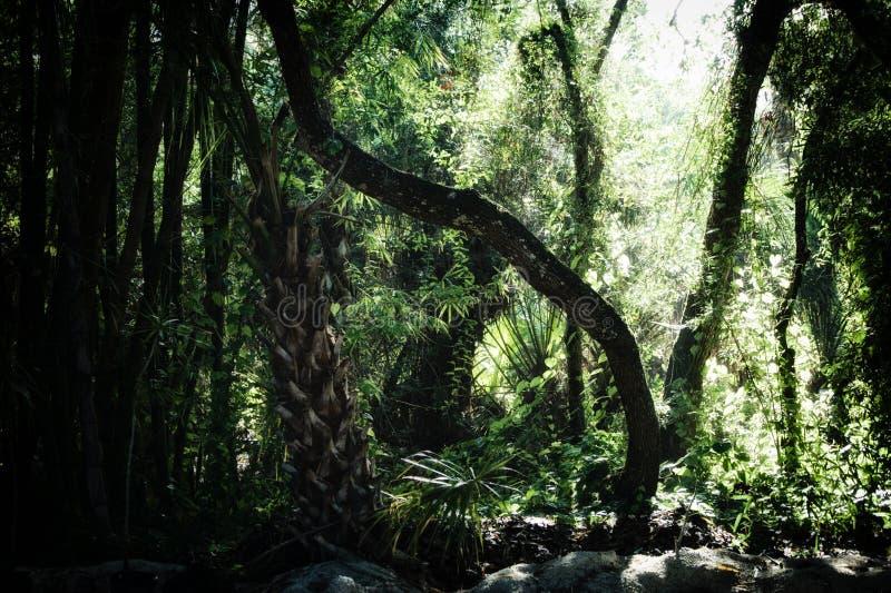在亚热带森林里面的清早 免版税库存照片