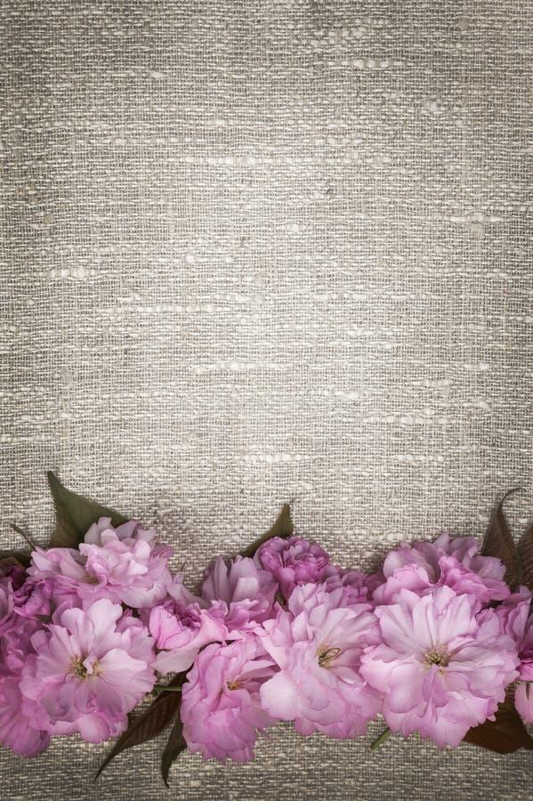 在亚麻制背景的樱花 免版税图库摄影