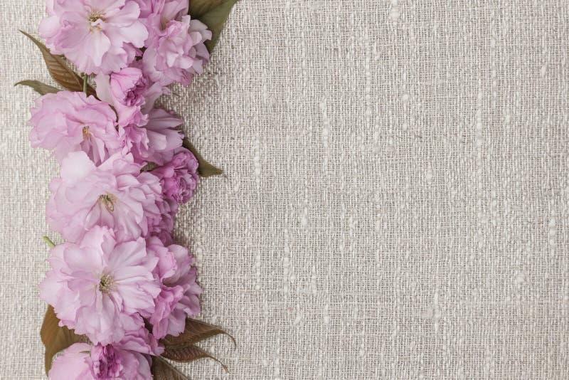 在亚麻制背景的樱花 免版税库存照片
