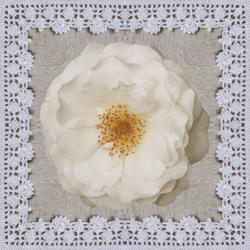 在亚麻布的白色玫瑰与钩针编织框架 手工制造拼贴画背景为情人节 图库摄影