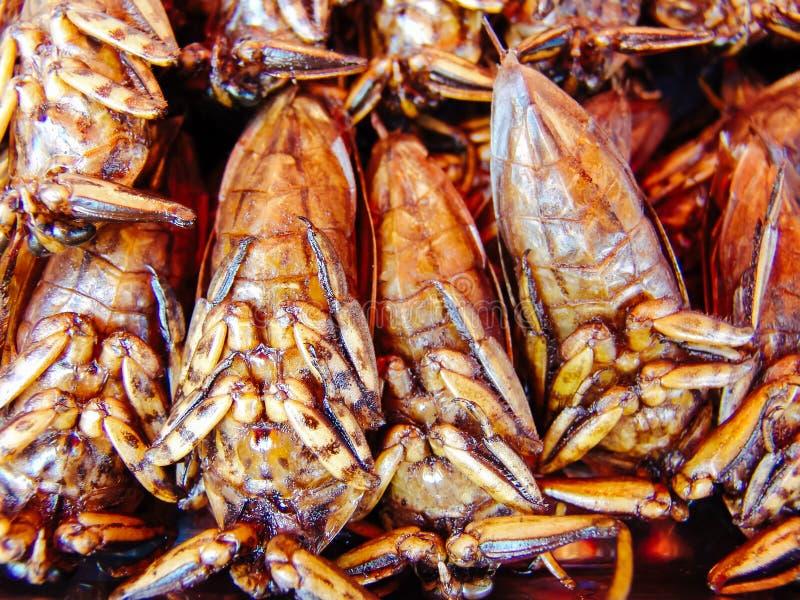 在亚洲的街道食物摊位的油煎的昆虫 免版税图库摄影