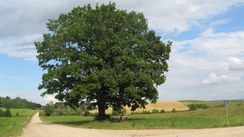 在交叉路的唯一树,立陶宛 免版税库存照片