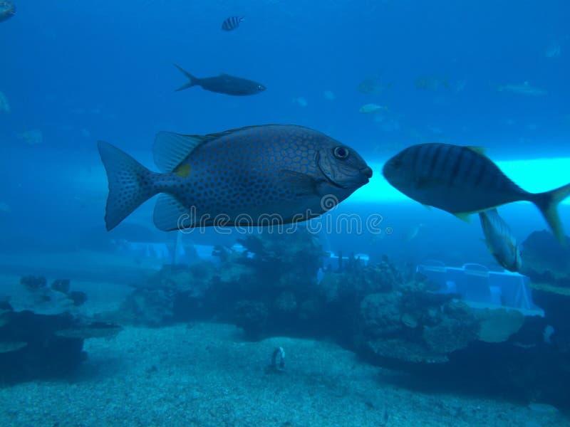 在人为水族馆的鱼 免版税库存图片