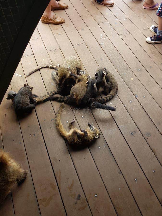 在人之间的野生动物 免版税库存图片