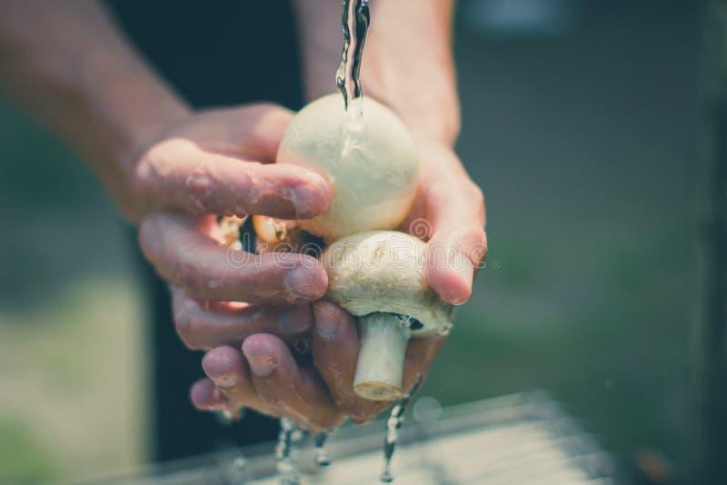 在人手上洗涤蘑菇有水飞溅的 免版税库存照片