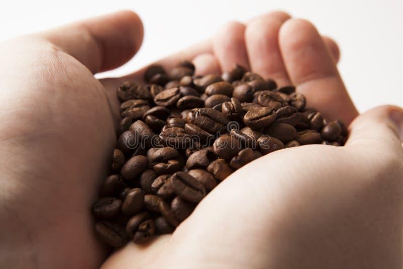 在人棕榈的烤咖啡豆  库存照片