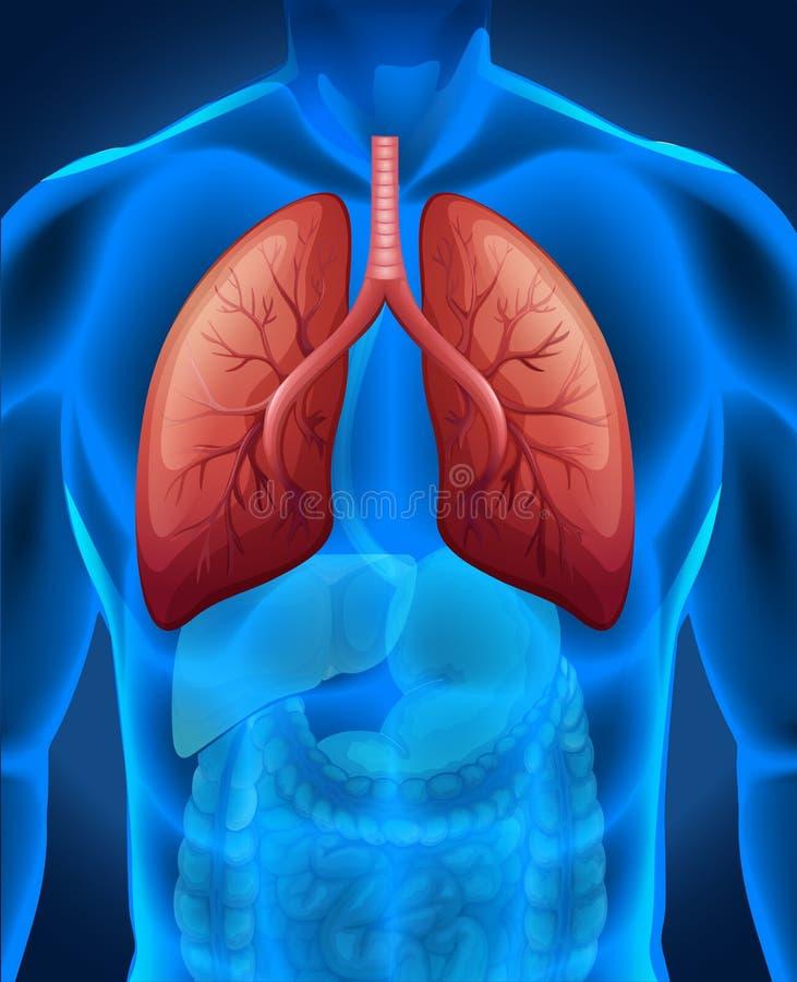 Download 在人的肺癌 向量例证. 插画 包括有 科学, 爱好健美者, 背包, 图象, 憔悴, 零件, 照片, 夹子 - 59108224