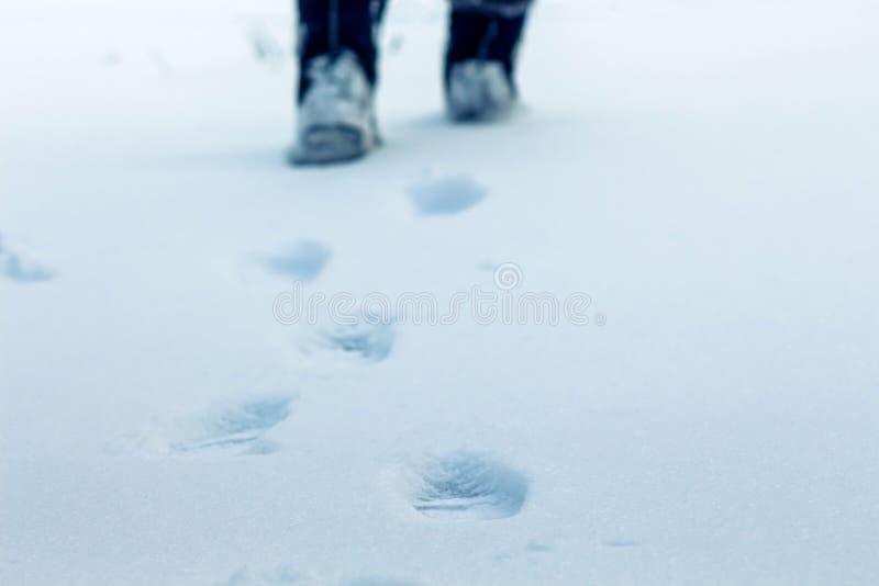 在人的腿雪踪影的一个冬日是可看见的,  免版税库存图片