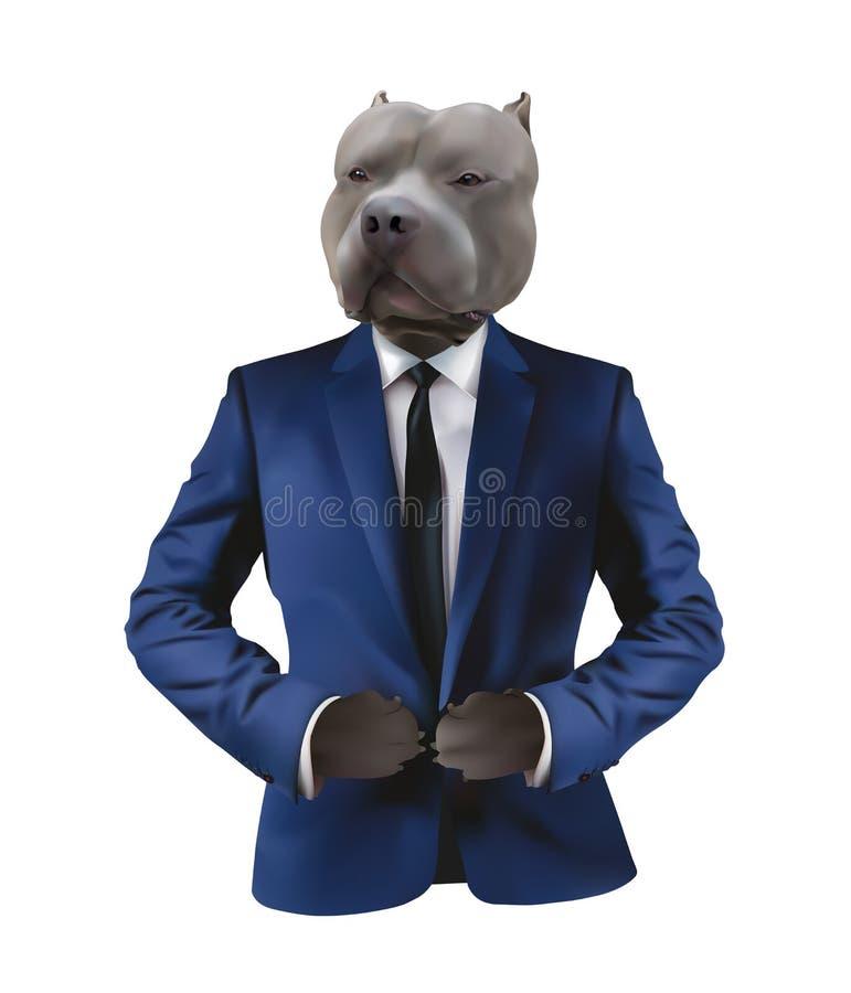 在人衣服的Pitbull在白色背景 向量例证