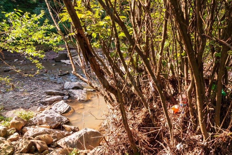 在从九英里奔跑最近洪水的一棵树和垃圾捉住的森林残骸在弗利克公园,匹兹堡,宾夕法尼亚,美国 免版税库存图片