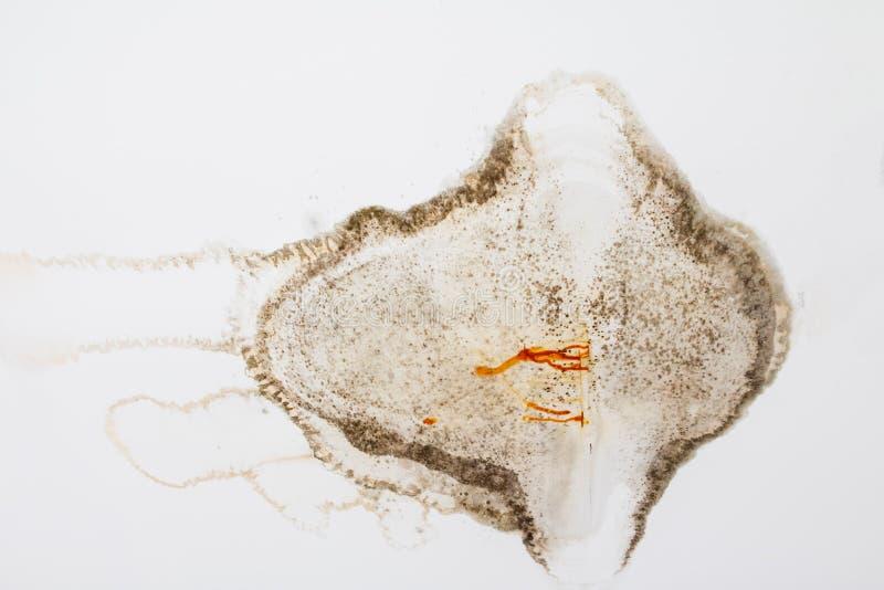 在从水漏损坏的石膏天花板内部大厦的真菌 图库摄影