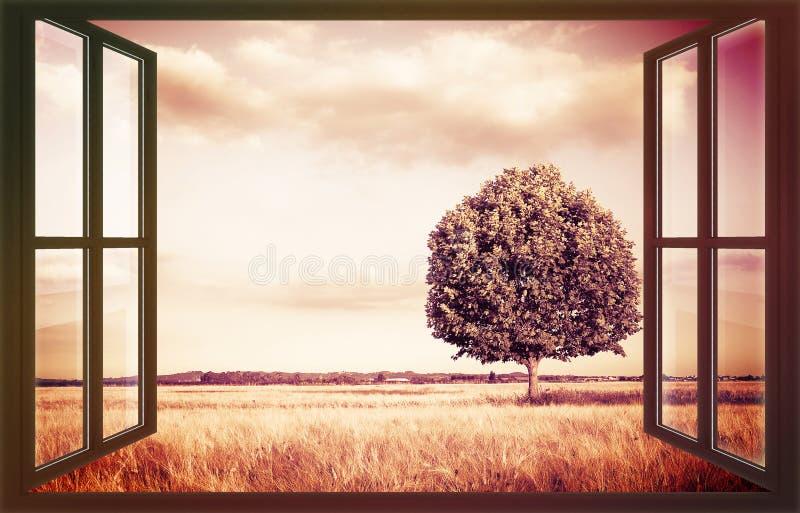 在从窗口看见托斯卡纳wheatfield的被隔绝的树-托斯卡纳-意大利-与拷贝空间的概念图象 图库摄影