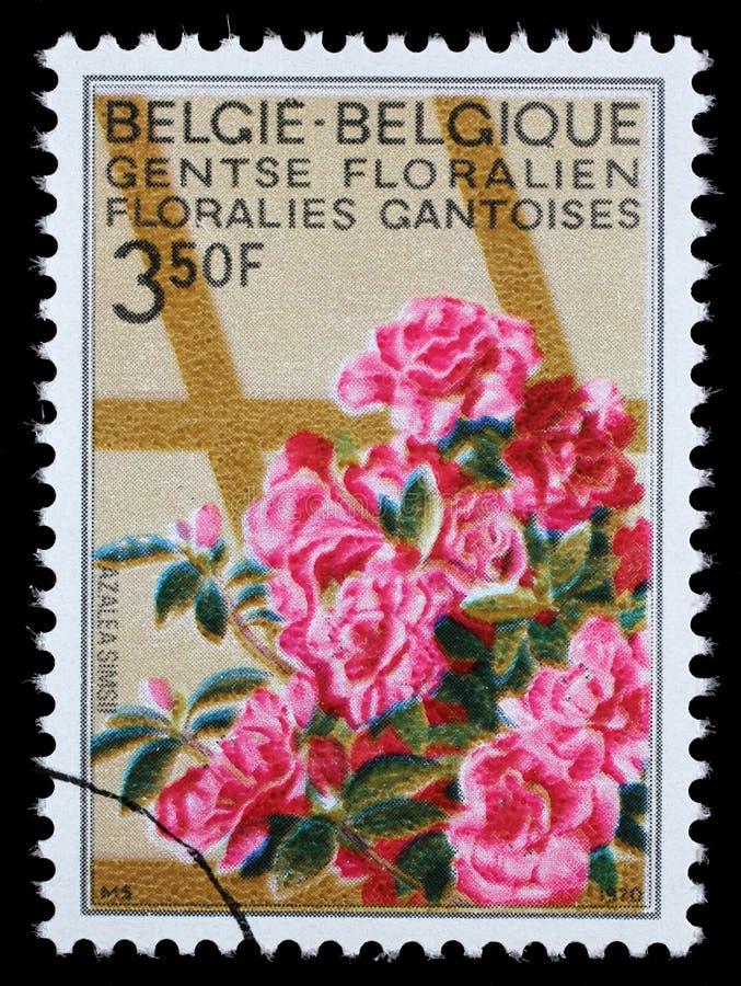 在从跟特花展问题的比利时打印的邮票显示杜娟花 库存照片