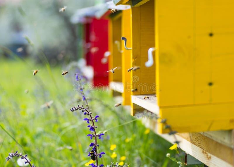 在他们的蜂房附近蜜蜂飞行 免版税库存图片
